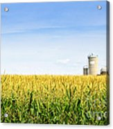 Corn Field With Silos Acrylic Print