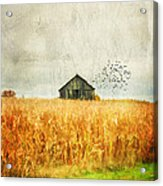 Corn Fields Of Kentucky Acrylic Print by Darren Fisher