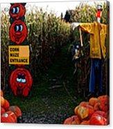 Corn Maze Acrylic Print
