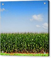 Corn Row Acrylic Print