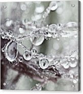 Corned Jewels Acrylic Print