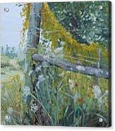 Corner Of Lace And Vine Acrylic Print