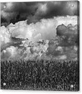 Cornfield And Clouds Acrylic Print