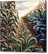 Cornfield Acrylic Print