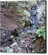 Corte Madera Creek On Mt Tamalpais Acrylic Print