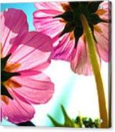 Cosmia Flower Twins Acrylic Print