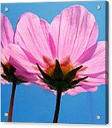 Cosmia Flowers Pair Acrylic Print
