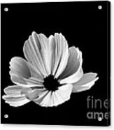 Cosmo Black And White Acrylic Print