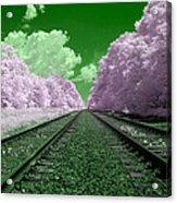 Cotton Candy Trees Acrylic Print