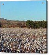 Cotton Landscape Protected 02 Acrylic Print