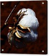 Cotton's Inner Light Acrylic Print