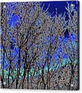 Cottonwood Line Up Acrylic Print