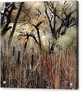 Cottonwoods And Cat Tails Acrylic Print by Denice Breaux