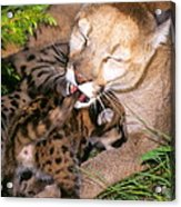 Cougar Mom Cleans Youngster Acrylic Print