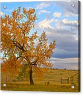 Country Autumn Landscape Acrylic Print by James BO  Insogna