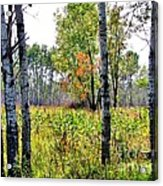 Country Autumn Acrylic Print