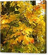 Country Color 10 Acrylic Print