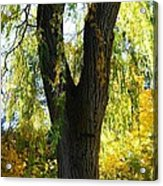 Country Color 20 Acrylic Print