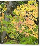Country Color 23 Acrylic Print