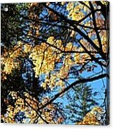 Country Color 25 Acrylic Print