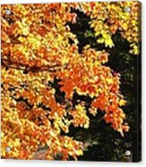 Country Color 26 Acrylic Print