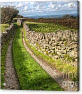 Country Lane Acrylic Print