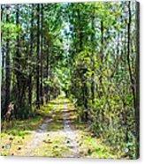 Country Path Acrylic Print