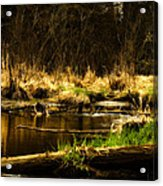 Country River Acrylic Print