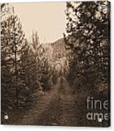 Country Road In Sepia  Acrylic Print