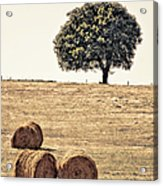 Countryside In Summer Acrylic Print