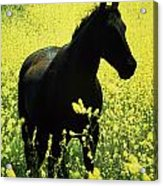 County Tipperary, Ireland Horse In A Acrylic Print