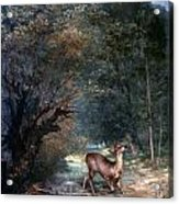 Courbet: Hunted Deer, 1866 Acrylic Print