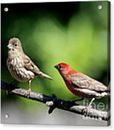Courtship In Nature . 40d8073 Acrylic Print by Wingsdomain Art and Photography