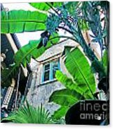 Courtyard Feelings Cafe Nola Acrylic Print