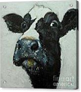 Cow 490 Acrylic Print