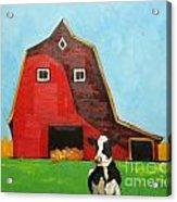 Cow And Barn 4 Acrylic Print