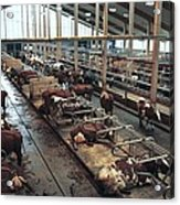Cow Shed Acrylic Print by Bjorn Svensson
