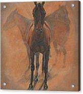 Cowponies In The Dust Acrylic Print by Elizabeth Lane