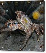Crab In A Plane Wreck Acrylic Print