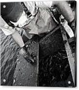 Crabbing On The Potomac Acrylic Print