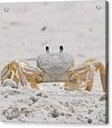 Crabby Eyes Acrylic Print