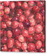 Cranberries Acrylic Print