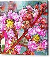 Crape Myrtle Blank Greeting Card Acrylic Print