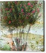 Crape Myrtle Acrylic Print