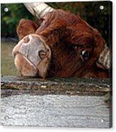 Crazed Look In The Bulls Eye Acrylic Print