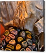 Crazee Corn Colors Acrylic Print