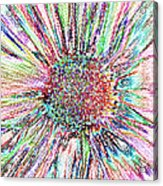 Crazy Daisy Colored Pencil Photoart Acrylic Print