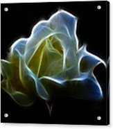 Cream Rose Acrylic Print