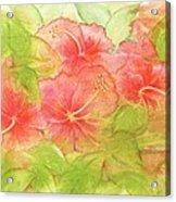 Creamsicle Hibiscus Acrylic Print