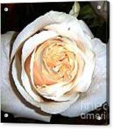 Creamy Rose I Acrylic Print
